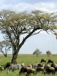 Safari Tours in Kenya